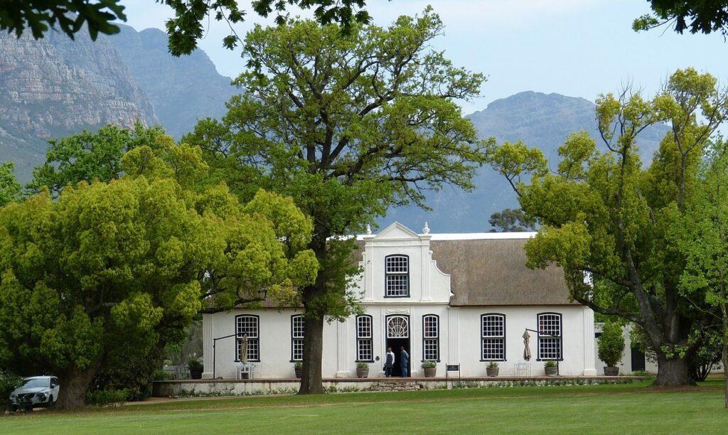 Sydafrikansk vingård